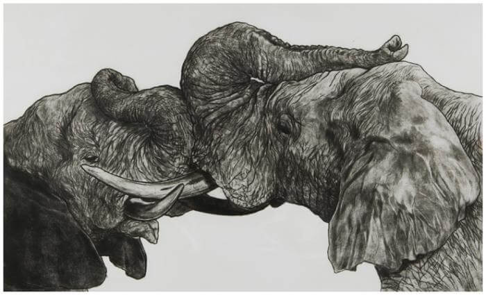 Elephants II - Jonathan Comerford
