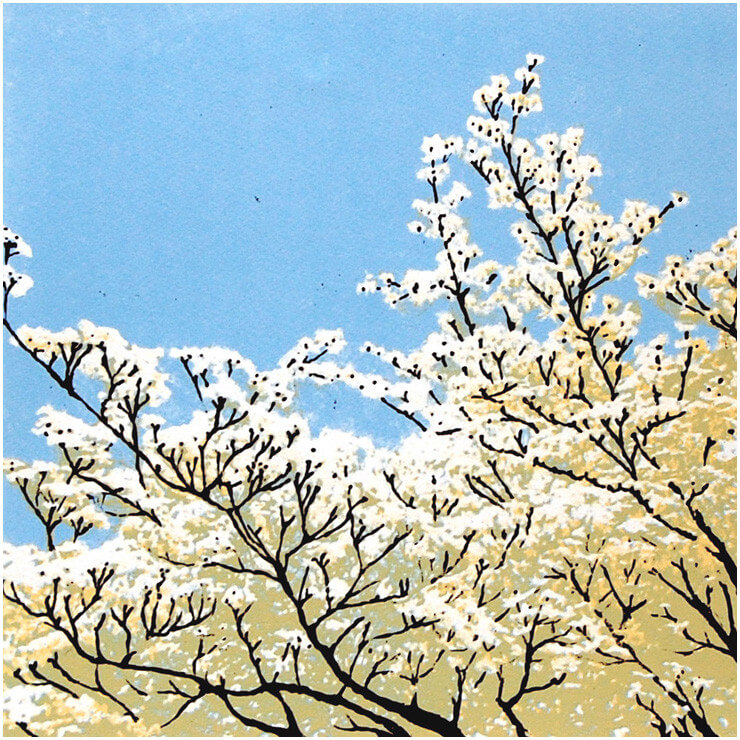 Spring Blossom - Lucy Chapman